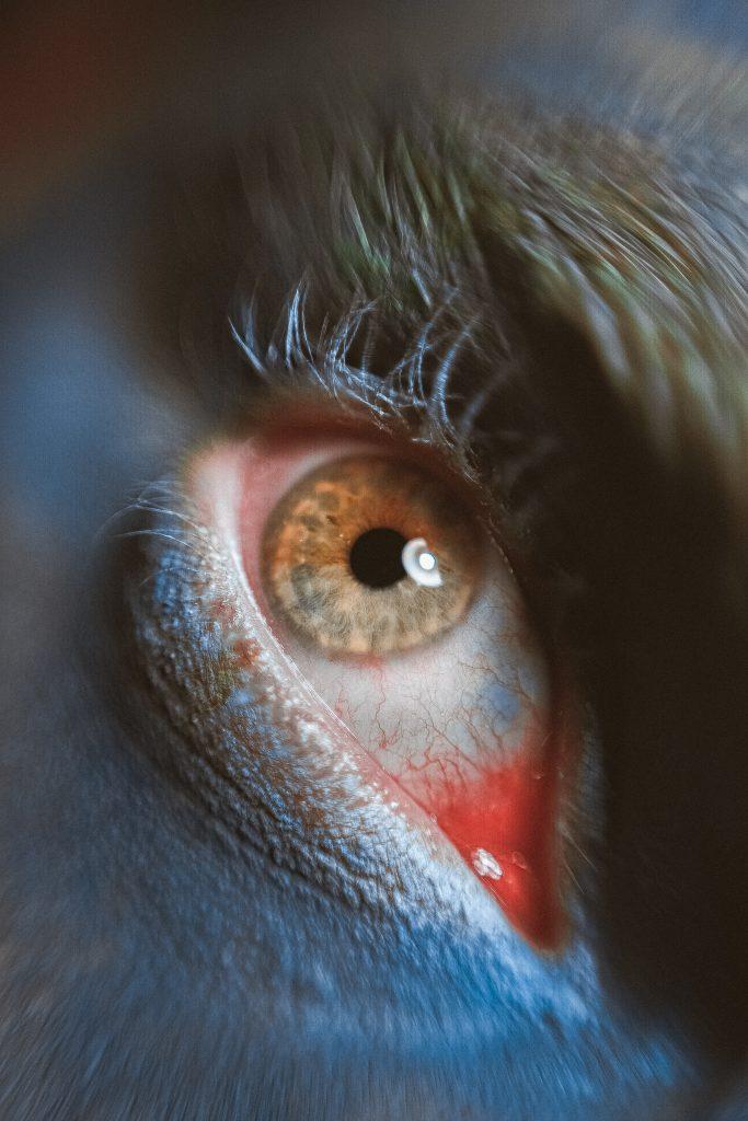 Les yeux qui grattent : quand et comment réagir ?